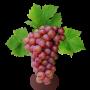 Саженцы Винограда в Копейске в ассортименте