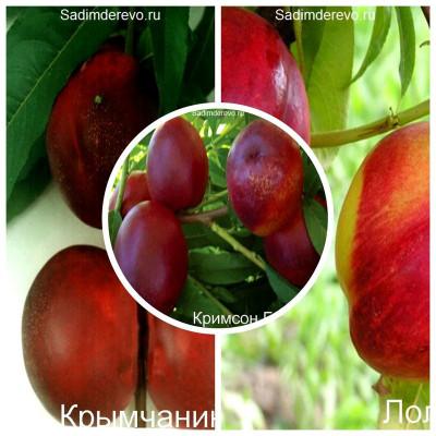 Нектарин - комплект из 3-х сортов: Нектарин Кримсон Голд > Нектарин Крымчанин > Нектарин Лола