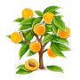 Саженцы Колоновидных абрикосов в Копейске почтой