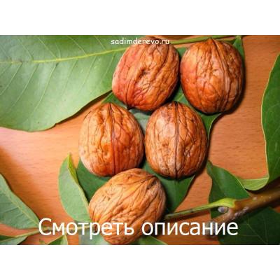 Грецкий орех Franquette