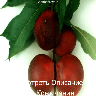 Нектарин Крымчанин