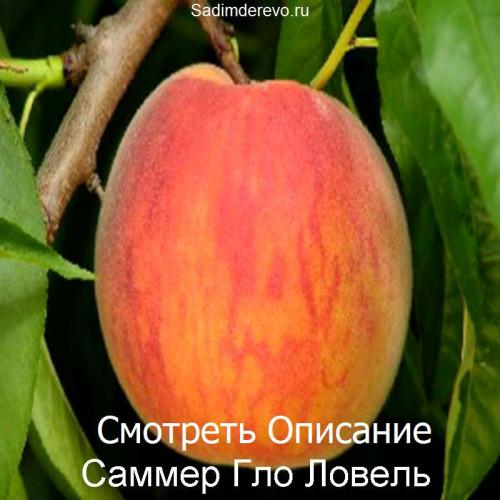 Саженцы Персика Саммер Гло Ловель - фото и описание