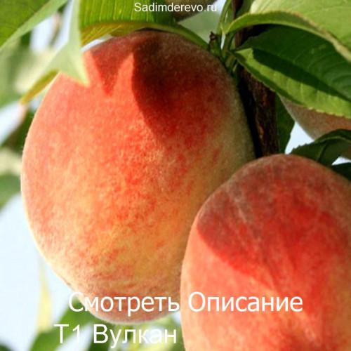 Саженцы Персика Т1 Вулкан - фото и описание