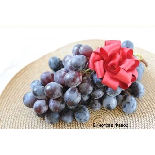 Саженцы Винограда Фавор - отзывы и описание