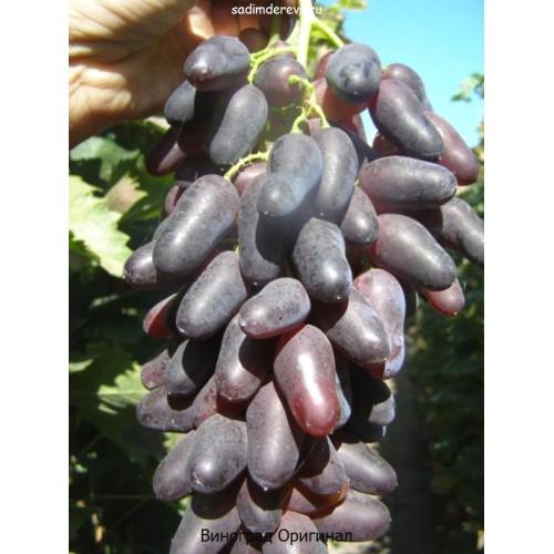 Саженцы Винограда Оригинал - цена и описание